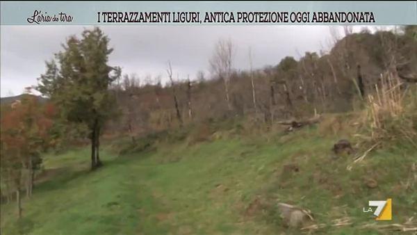 I terrazzamenti liguri, antica protezione oggi abbandonata